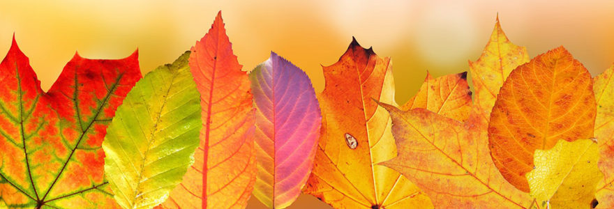 autumn-leaves_1000